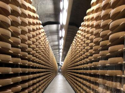 Grosser Lagerraum von Käselaiben